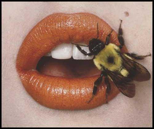 insetos na boca