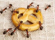 sonhos com formigas