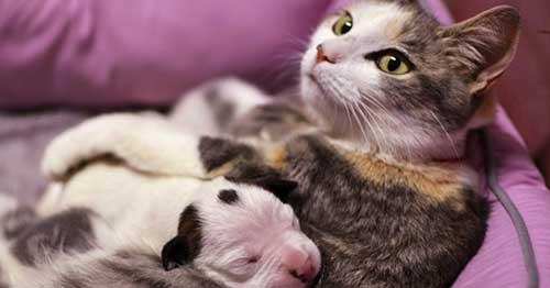junto a um felino