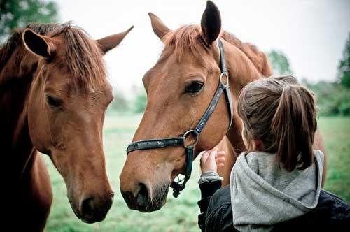 Sonhar com cavalo doente