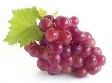 comento frutas