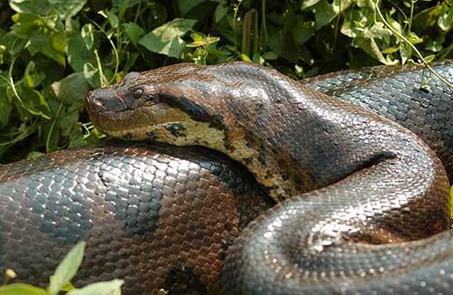animais serpentosos