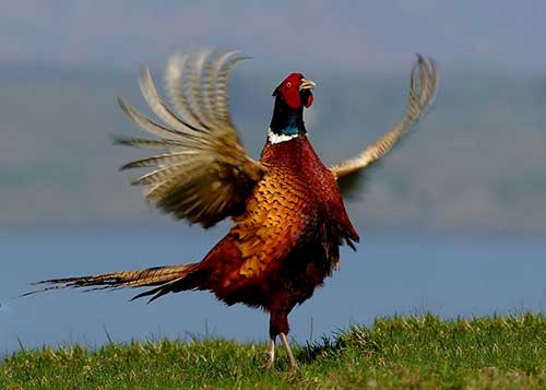 batendo asas