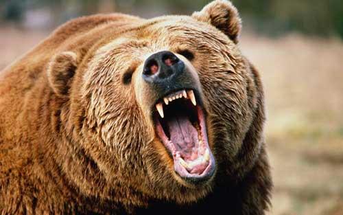 urso oq preto sonhar com significa