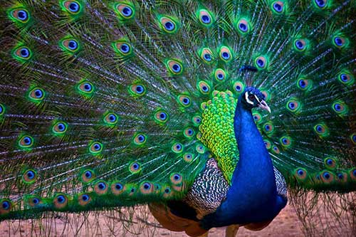 fotos de aves